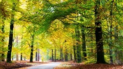 Vergaderen in de natuur: Top 3